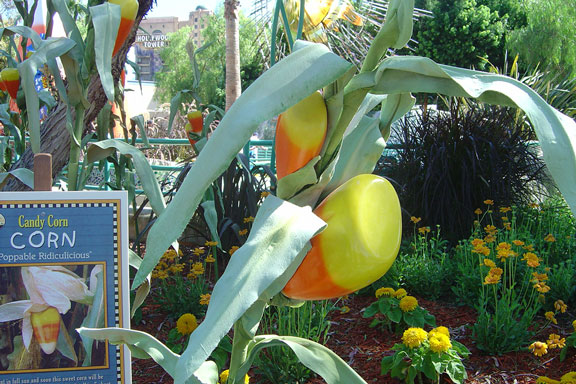 Corn at Disneyland